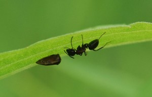 ant-nap